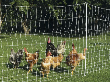 chicken electric poultry netting
