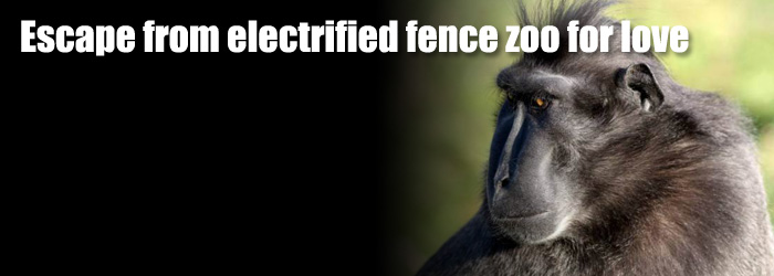 monkey escape from electric fence